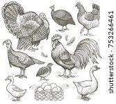 poultry set. birds rooster ... | Shutterstock . vector #753266461