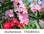 close up soft pink sweet   red...   Shutterstock . vector #753284311