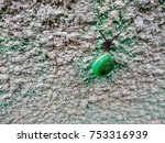 Small photo of snail climb on sandstone wall, concept try to goal, try to success, pass threat to winner