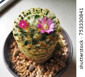 a pink cactus flowers   Shutterstock . vector #753330841
