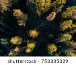 aerial view of conifer trees in ... | Shutterstock . vector #753335329