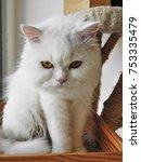 look at my eyes   Shutterstock . vector #753335479