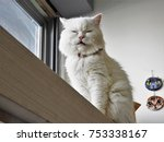 a fluffy cat | Shutterstock . vector #753338167