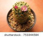 a beautiful plant for decorating | Shutterstock . vector #753344584