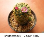 a beautiful plant for decorating | Shutterstock . vector #753344587