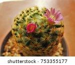 pink cactus flowers make me... | Shutterstock . vector #753355177