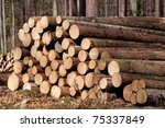 picture of harvested pine trees ... | Shutterstock . vector #75337849