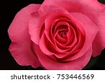 single beautiful  pink rose on... | Shutterstock . vector #753446569