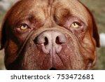 Dog Face Background.dog...