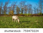 white horse in the meadow.... | Shutterstock . vector #753473224