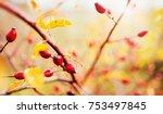 rosa rubiginosa  rose hips  dog ... | Shutterstock . vector #753497845