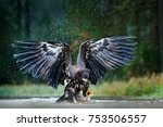 eagle in flight above the dark... | Shutterstock . vector #753506557