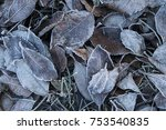 frosted leaves in the autumn | Shutterstock . vector #753540835