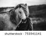 Stock photo scottish wild horses portrait 753541141