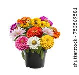 variety of colorful flowers in... | Shutterstock . vector #753569581