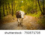 portrait of a cow on a rural... | Shutterstock . vector #753571735