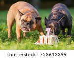 picture of two french bulldogs... | Shutterstock . vector #753613399