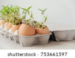 seedling plants in eggshells ... | Shutterstock . vector #753661597