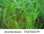 background  blurred picture of... | Shutterstock . vector #753706579