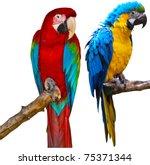 ara ararauna and red and green... | Shutterstock . vector #75371344