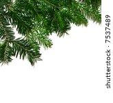 fresh green fir branches... | Shutterstock . vector #7537489