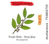 medicinal herbs of china.... | Shutterstock .eps vector #753803755