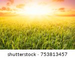 rice field and sky background... | Shutterstock . vector #753813457