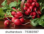Garden fresh radishes and spinach leaves spilling from wicker basket onto wood table. Macro with shallow dof. - stock photo