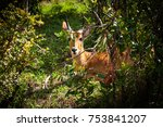 portrait of an impala antelope... | Shutterstock . vector #753841207