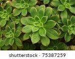 Variegated Succulent Background