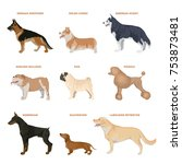 dog breeds set. illustration of ... | Shutterstock . vector #753873481