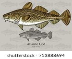 atlantic cod  skrei. vector...   Shutterstock .eps vector #753888694