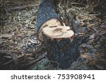 after wildfire burning tree at... | Shutterstock . vector #753908941