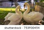 belgium  brugge  begijnhof ... | Shutterstock . vector #753930454