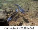 Two Fish Swimming In The Sun I...