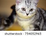 beautiful cat s  at the cat... | Shutterstock . vector #754052965