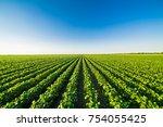 green ripening soybean field ... | Shutterstock . vector #754055425
