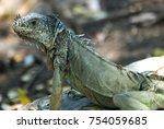 iguana in tulum | Shutterstock . vector #754059685