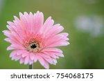 pink gerbera flower | Shutterstock . vector #754068175