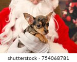 young puppy during christmas   Shutterstock . vector #754068781