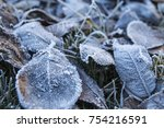 frosted leaves. hoarfrost. | Shutterstock . vector #754216591