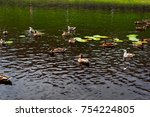 Small photo of Ducks and larus float in a pond with water lilies
