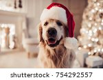Stock photo merry christmas and happy new year cheerful dog labrador is sitting in santa claus hat golden 754292557