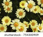 yellow flower superb for... | Shutterstock . vector #754300909