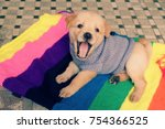 Stock photo cute puppy on colorful blanket dog is friendly animal and loyal young pup sit at house 754366525