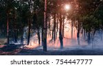 Forest Fire. Burned Trees Afte...