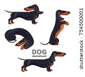 dachshund dog with black fur in ...   Shutterstock .eps vector #754500001