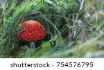 amanita muscaria  poisonous... | Shutterstock . vector #754576795