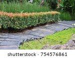Stairway In The Garden  Garden...