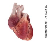 3d rendered medical... | Shutterstock . vector #75463516